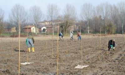 Cremona. Avvio della piantumazione per creare il Parco del Morbasco Sud.
