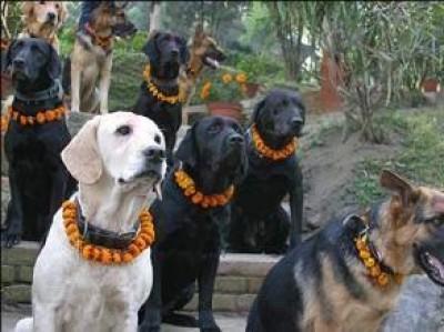 Lodigiani. Chi trae vantaggio dal traffico dei cani?