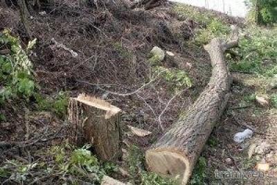 Ancora alberi tagliati in città.