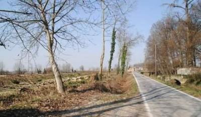 Censimento alberi tagliati|LUCI