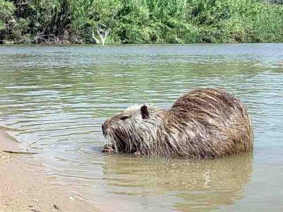 Cremona all'apice notorietà per maltrattamenti animali| E.Sciacca