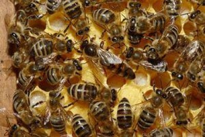 L'Europa ha appena messo al bando i pesticidi ammazza-api