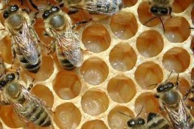 Avaaz.org festeggia la messa al bando dei pesticidi ammazza api