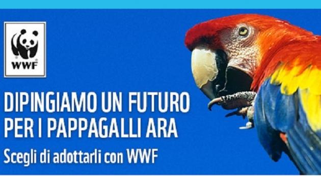 WWF Adotta un pappagallo in Amazzonia