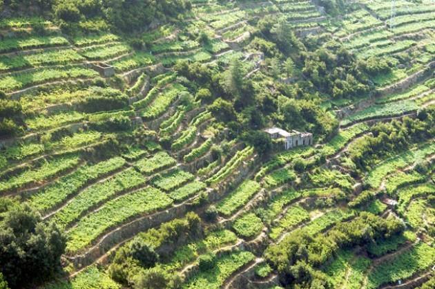 Terrazzamenti in Liguria, la grande opera