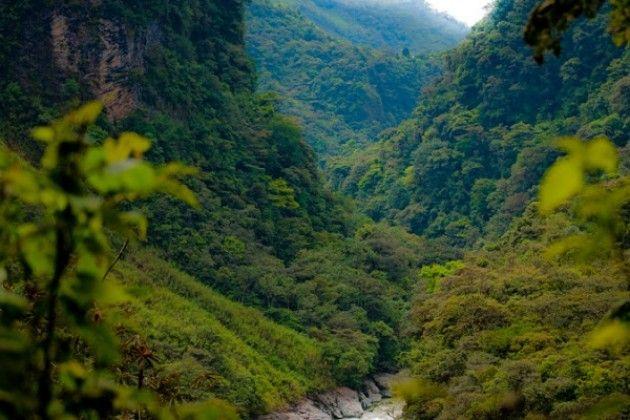 In Amazzonia il 200% di deforestazione : dobbiamo fermarli