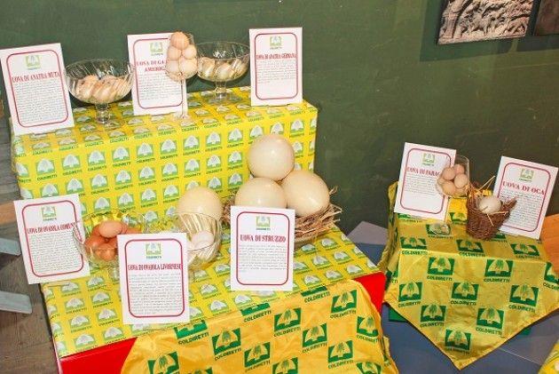 Expo, giornata mondiale dell'uovo: uno su tre arriva dalla Lombardia