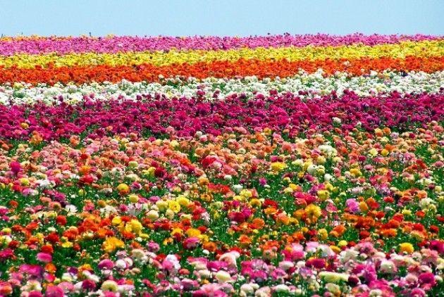 EXPO: La festa dei fiori