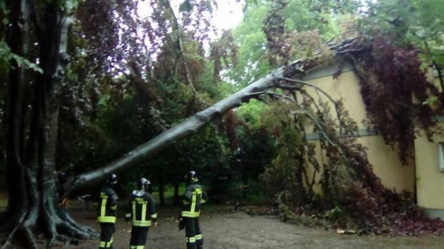 Lomazzo - L'albero si abbatte sulla scuola elementare (B)
