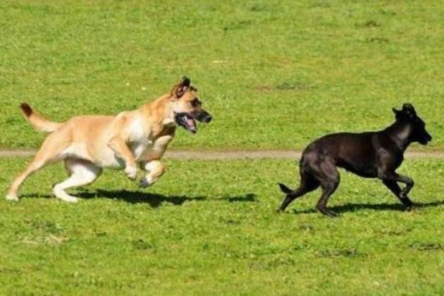 Spino d adda cremona area cani al via for Mercatone dell arredamento spino d adda