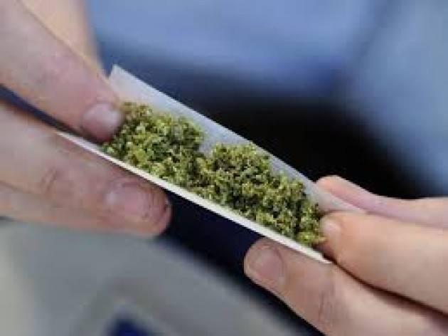 Cannabis: Leviamoci e laviamoci dai pregiudizi. Comincia l'iter parlamentare.