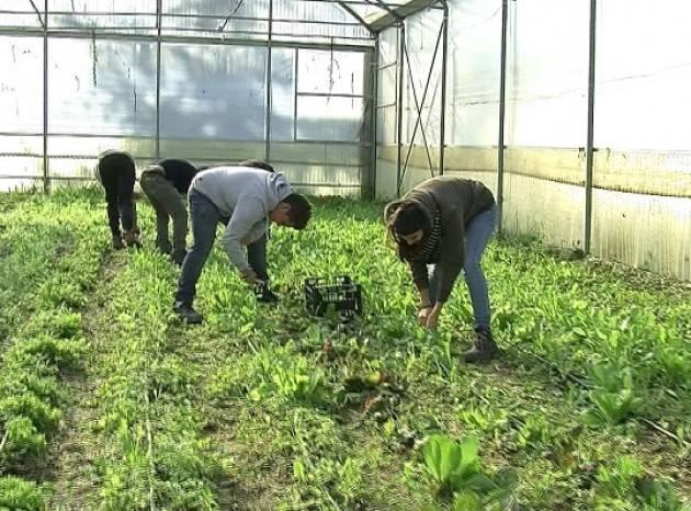 Flai-Cgil Fare rete per la legalità in agricoltura