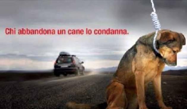 Contro l'abbandono degli animali: per dire no ad un gesto atroce e incivile