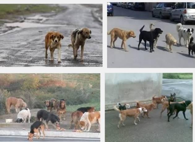 Da oggi un fiore può aiutare i cani abbandonati