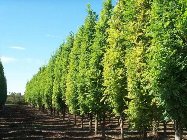 Il Comune di Bergamo pianterà 725 nuovi alberi in città entro il 2016