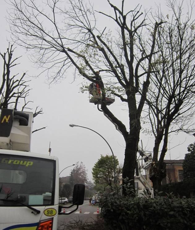Cremona piano potature interventi di manutenzione del - Interventi di manutenzione ...