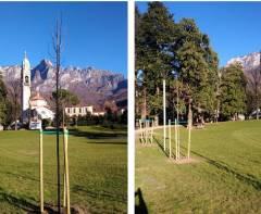 Lecco Partite le piantumazioni: 48 i nuovi alberi in città