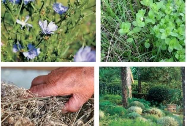 A Piacenza  Un laboratorio su erbe, piante e fiori di casa nostra.
