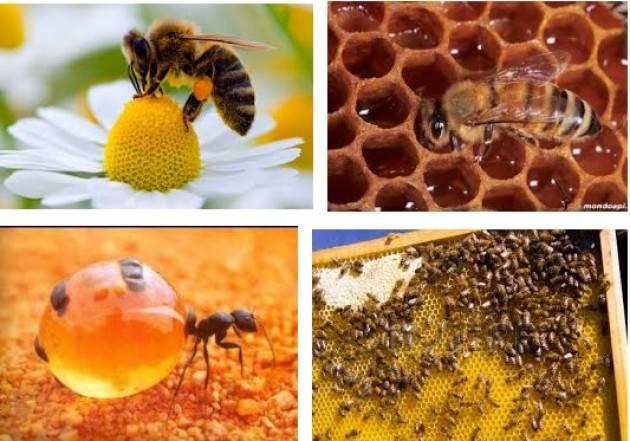 Coldiretti Lombardia Il maltempo 'taglia le ali'  alle api: -50% miele con primavera fredda