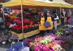 Coldiretti Festa della mamma' con Campagna Amica Trionfo di fiori oggi in piazza Stradivari a Cremona