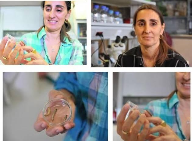 Il bruco mangia-plastica è stato scoperto dalla ricercatrice Federica Bertocchini , italiana in Spagna