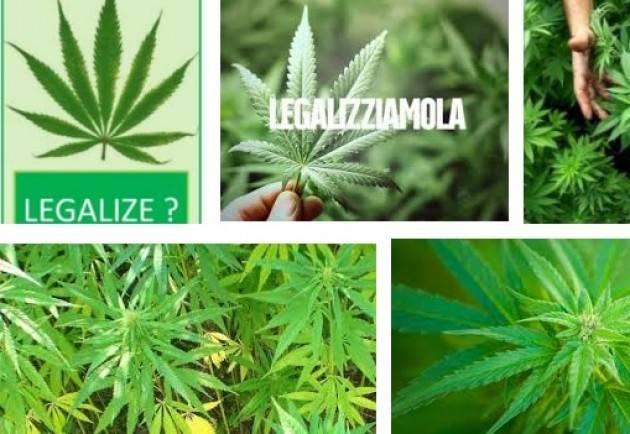 ADUC Legalizzazione cannabis. Ecco perche' in Italia e' probabile che non ci sara'...