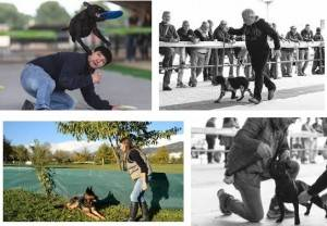 Crema Manifestazione con cani addestrati domenica 23 luglio Evento a favore della associazione CCSVI