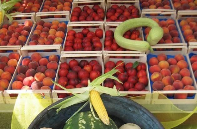 Domenica a Crema  Campagna Amica 'L'anguriata'  e tutti i frutti 'amici' della tintarella