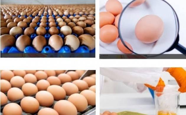 Coldiretti Consumi, scandalo uova olandesi contaminate: 'Togliete il segreto su import prodotti derivati'