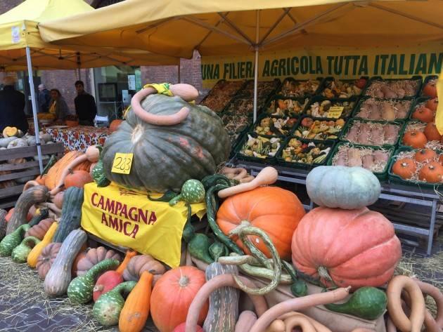 Domenica grande festa della zucca in piazza Stradivari a Cremona