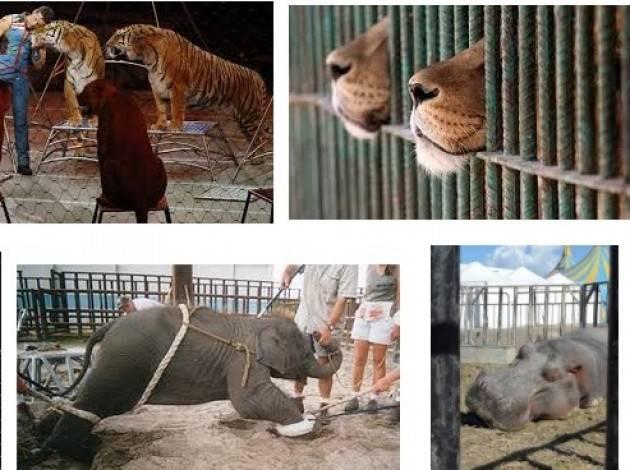 Circo con animali a Pandino , risponde il sindaco Maria Luise Polig