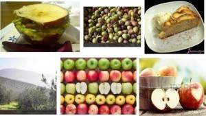 Coldiretti Lombardia Consumi: dimezzate olive e mele, nei vigneti addio a 1 grappolo su 5