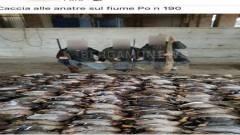 WWF Due giovani cacciatori bergamaschi  uccidono 190 anitre selvatiche lungo il Po a Cremona