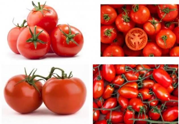 Coldiretti Pomodoro, nemmeno 8 centesimi al chilo Prandini: 'Prezzo sfavorevole per il settore'