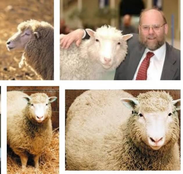 AccaddeOggi 22 febbraio 1997 - A Roslin (Scozia) viene clonato un mammifero, la pecora Dolly