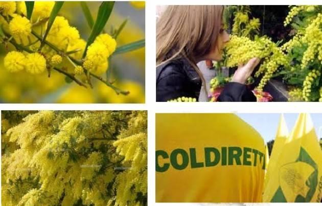 Coldiretti Milano Domani mercoledì 7 marzo, ore 11, piazza Mercanti 2 Festa della Donna