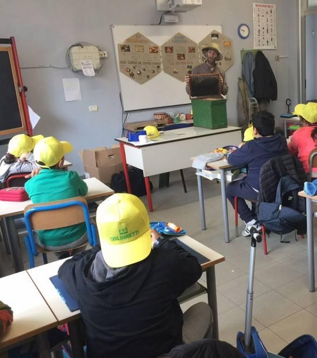 Coldiretti Cremona Le api e il miele: apicoltori in cattedra con il progetto didattico di Campagna Amica