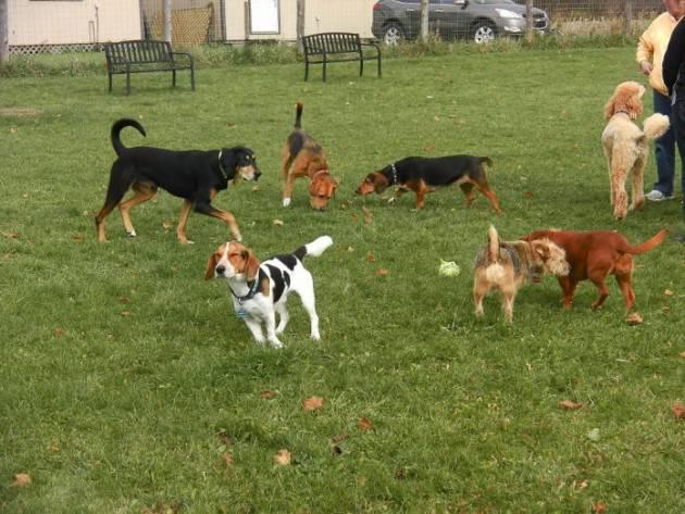 Cremona Area sgabamento cani  parco Fazioli. Nessuno ci ascolta Gruppo 4 zampe