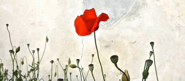 Arci Cremona per il 25 aprile: 'Liberarci' 2018