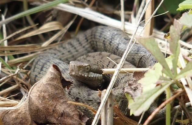 Castelleone Mese di maggio: apertura delle strutture di Cascina Stella Mostra fotografica sui serpenti