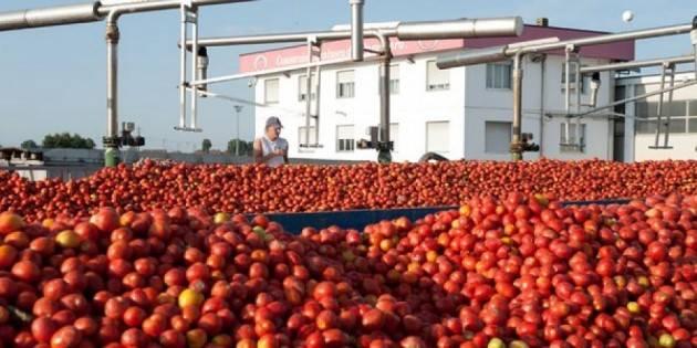 Flai Cgil primo sindacato nel Consorzio Casalasco del pomodoro