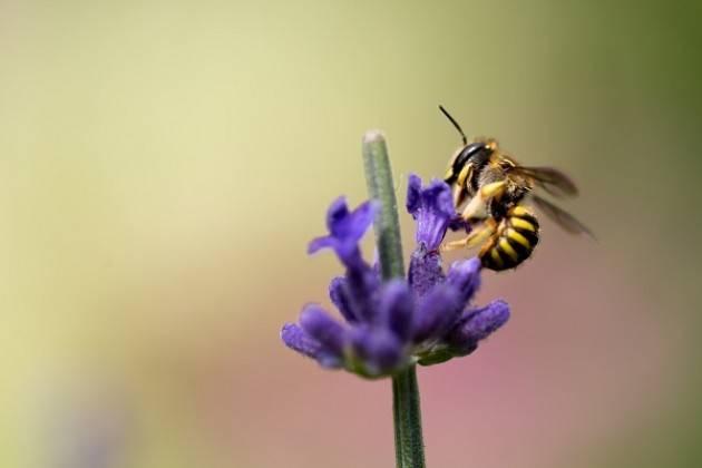 Coldiretti Lombardia: causa maltempo perso fino al 50% del miele