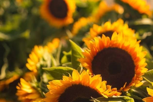 Cremona: martedì 26/6 Mini-Market di Campagna amica dedicato ai sapori di stagione