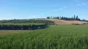 Rivanazzano Terme APERITIVO CON VISTA  LE PESCHE DI VOLPEDO  ALL' AGRITURISMO CHIERICONI  sabato 21 luglio