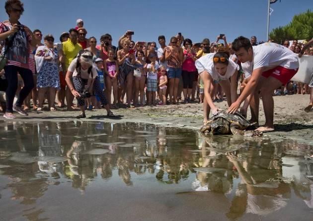 'Pronto soccorso' in spiaggia per le tartarughe