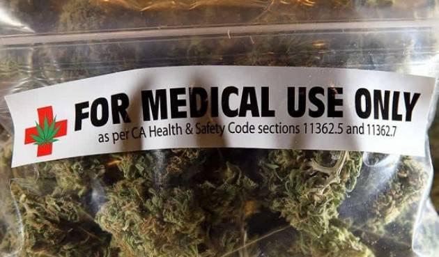 Cannabis terapeutica, aumenta l'import dall'Olanda Giulia Grillo: 'Una prima risposta ai pazienti'