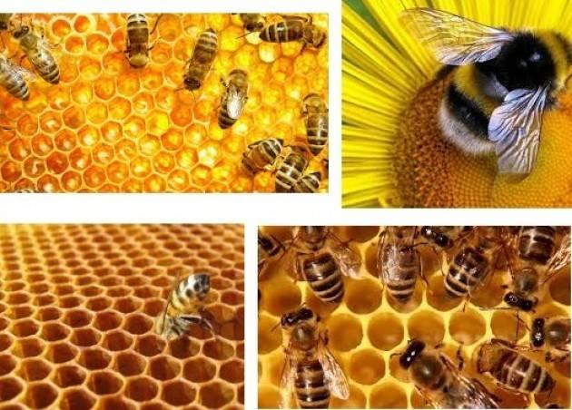 Coldiretti Caldo, api bloccate dal clima pazzo: 'bruciato' il 50% del miele lombardo
