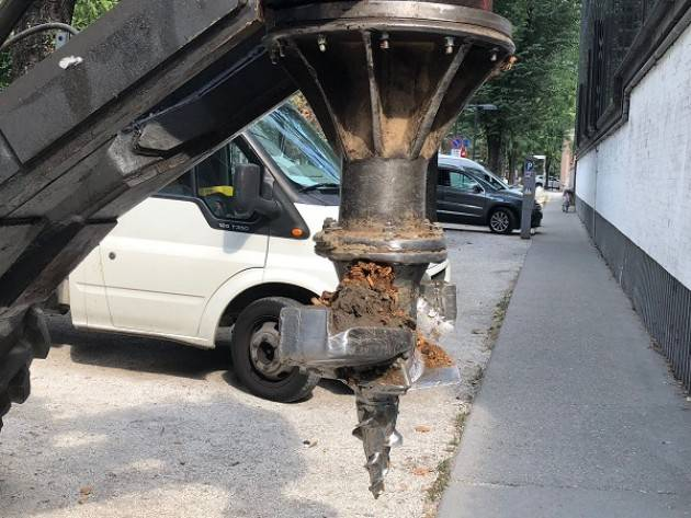 Cremona: attuato il piano rimozione ceppaie