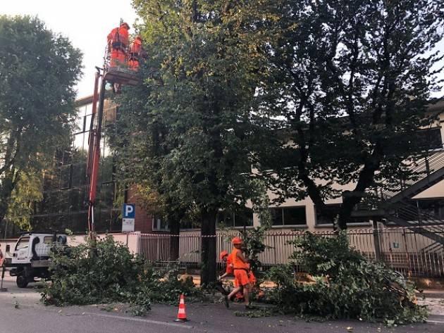 Cremona: ciclabile di viale Trento e Trieste, riqualificazione del verde e niente modifiche alla viabilità