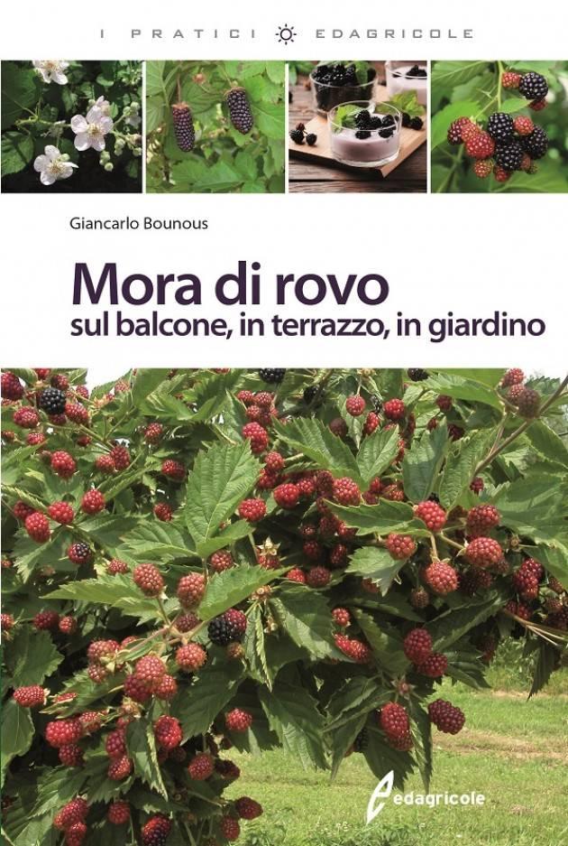 Edagricole MORA DI ROVO sul balcone, in terrazzo, in giardino di Giancarlo Bounous